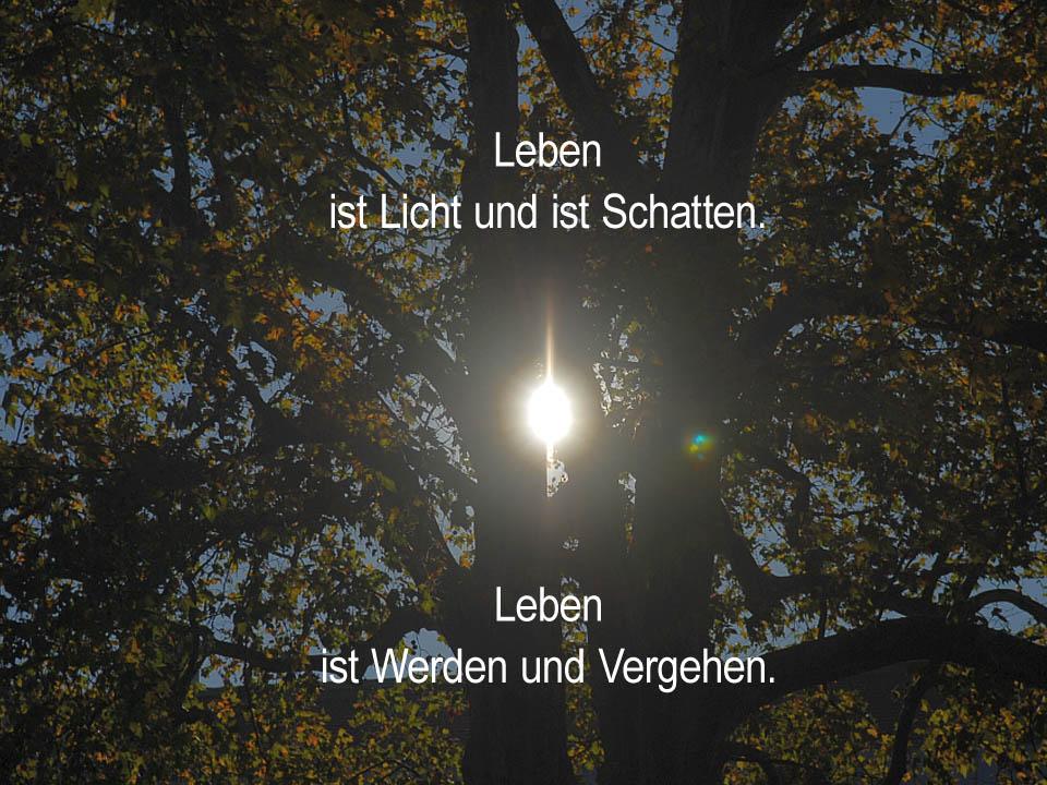 Leben ist Licht-und-Schatten