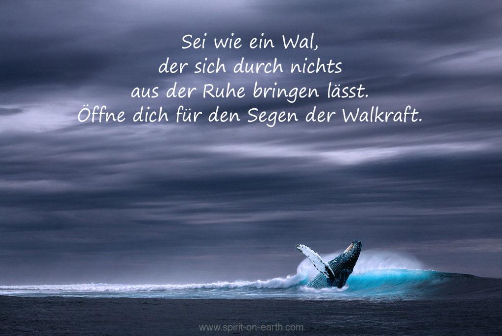Kraft der Wale