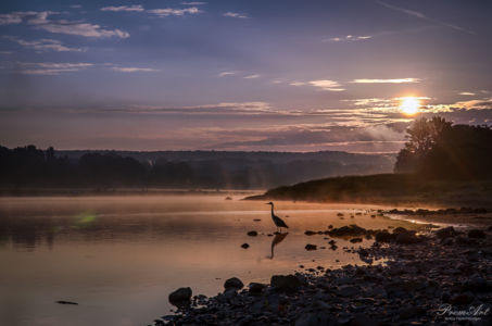 Morgenstimmung an der Elbe in Dresden